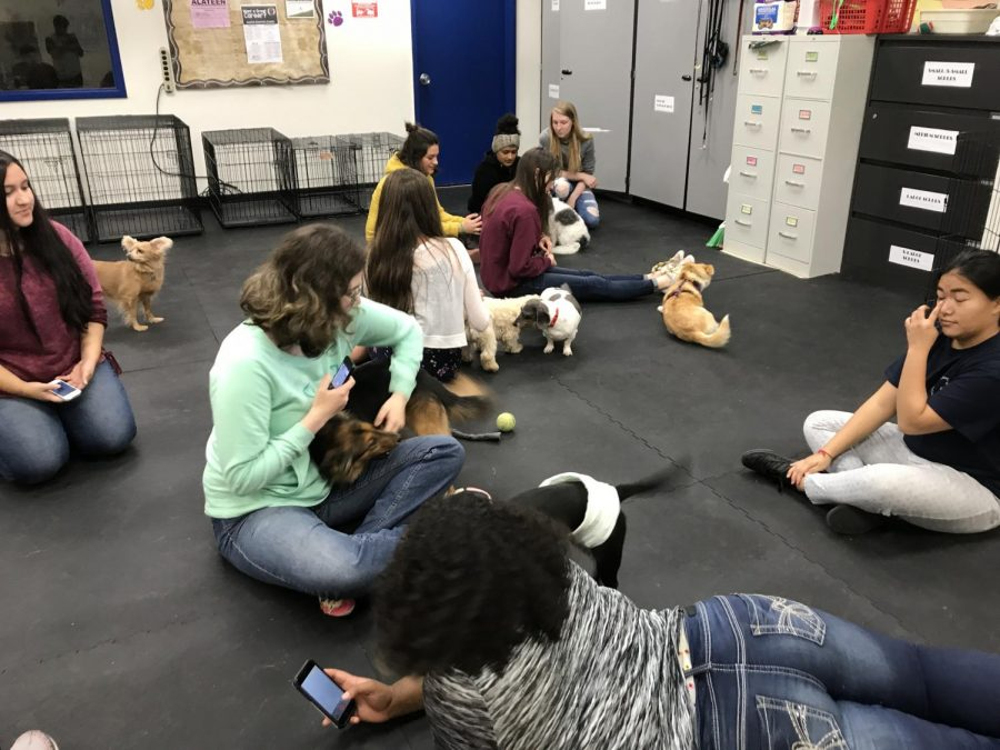 Students take care of the small dogs during the Veterinary Science class at KCC.
